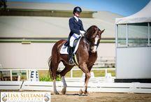 Equestrian / #Dressage