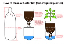 kasvit ja kasvatus