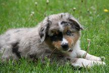 Cutie Pies / Dogs