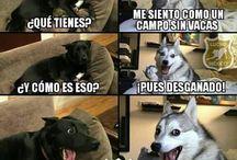 Memes sobre perros