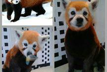 Andrea Design grooming / Creative grooming  Asian style grooming Kreatív kutyakozmetika