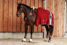My horse tack