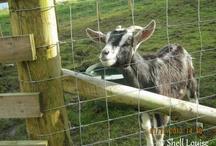 Featherdown Farm / Our holiday to Featherdown Farm, Cumbria