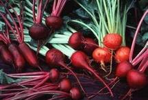 fav foods / by Lisa Sanner