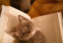 Kittens, Kittens, Kittens