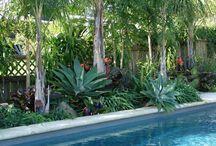 Pool Planting Ideas