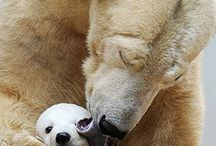 animals mother love