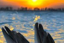 Tramonti.... / il momento magico della giornata,coi suoi colori,silenzi prima della sera,un momento che ispira,sogna,pensa,lo adoro...