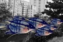 Paraisos Artificiais / Peixes amazônicos colados sobre fotografias de Manaus degradada. / by Jorge Laborda