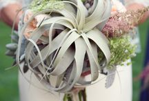 Weddings & Events by Dr Delphinium / Dallas Wedding Flowers