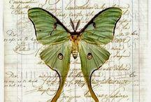 бабочки стрекозы..кузнечики