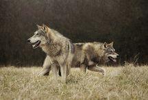 European wolf pack