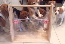 Beagle in Mind