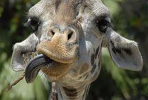 Funny Animals ♡.♡.♡
