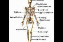 Menselijk lichaam woordenschat