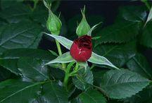 gify z kwiatami....