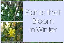 Winter plants