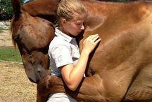 Animal love / I love horses