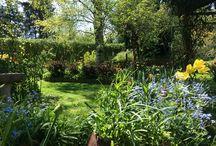 My Garden ❤️ ( min have ) / Min have er mit lille frirum