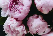 peonies and my other favorite blooms / by Karlee Manguilli