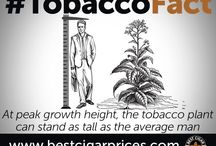 Cigar Facts / Best Cigar Prices presents some little to lesser known cigar facts to intrigue everyone from the beginner to the aficionado cigar enthusiast.