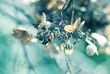 Blues / by Dianne Shiozaki
