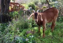 West Vista Urban Farm School / Alternative learning & lifestyle