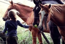 Horses / by Melanie Hyer