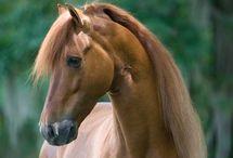 Лошадки / Люблю лошадок