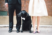 Matrimonio - Io con Voi