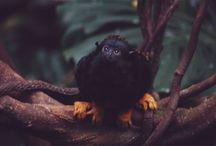 wildlife photos by Sonder Studios