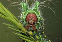bizardní příroda