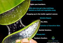 Aloe vera Uses / Aloe Vera is the only plant the extracts of which are used for maintaining health and maximizing beauty.