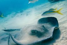 animais marinhos / under sea