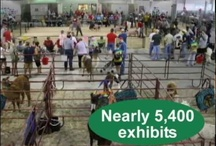 4-H & Youth Ideas / by Lancaster County