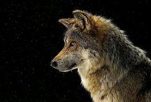 Zvířatka / Zde najdete různá zvířata ať už realná až po fantasy, nebo jakkoliv upravena. No jo, kdo by neměl rád zvířátka.... ♥♥♥♥♥♥♥♥