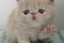 kediler ♥