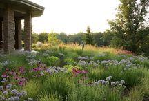 Front Garden - Prairie