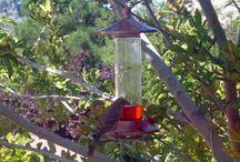 Luv Hummingbirds & Birds / Hummingbirds are my favorite