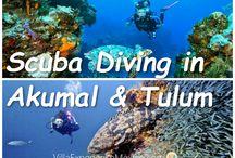 Tourists Attractions - Akumal & Tulum
