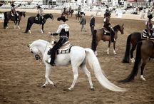 Horses 2015 Events & Shows
