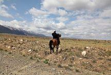 Le Balikun / Le Balikun est un courageux cheval de montagne, au tempérament doux, qui est capable de supporter des températures très basses. Il s'agit d'une race locale qui a compté jusqu'à 15 mille individu en 1985 et qui n'en comptait plus que 5800 fin 2006.
