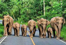 Слоны, слоники, слоненки. слонята...