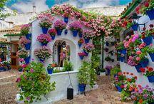 gardenn... / dream garden...
