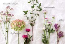 Flowers・花