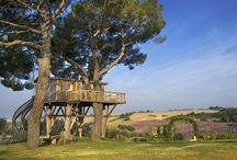 Rifugio tra gli alberi / The house on the largest tree in Europe - a suite of 87 mq suspended in the lavender fields.