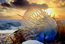 Oceanic Wildlife