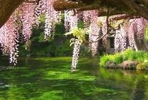 Green Thumb - Flora