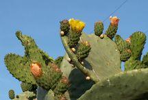 Cactus auwwwzo mooi grillig