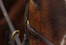 <<Horse Details>>